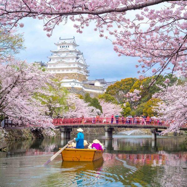 Japonya Sakura Turu